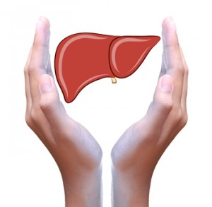 liver in hand